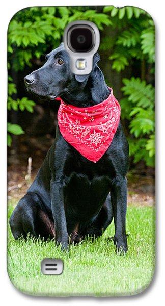 Black Labrador Retriever Galaxy S4 Case