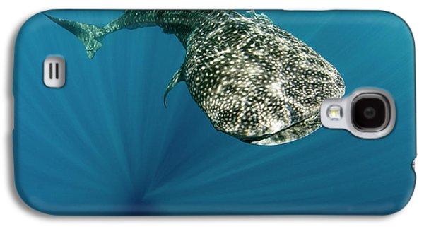 Whale Shark, Cenderawasih Bay, West Galaxy S4 Case