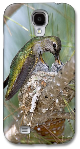 Feeding Young Galaxy S4 Case - Annas Hummingbird by Anthony Mercieca