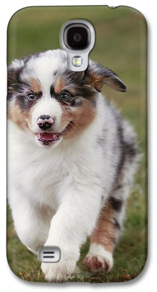 Australian Shepherd Puppy Galaxy S4 Case