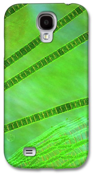 Desmids On Sphagnum Moss Galaxy S4 Case by Marek Mis