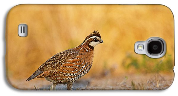 Northern Bobwhite (colinus Virginianus Galaxy S4 Case by Larry Ditto