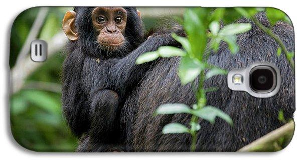 Monkey Galaxy S4 Case - Africa, Uganda, Kibale National Park by Kristin Mosher