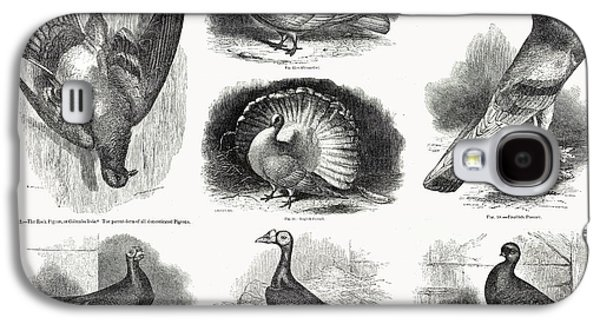 1868 Darwin Pigeon Breeds Illustration Galaxy S4 Case by Paul D Stewart