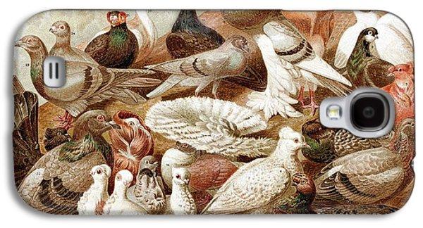 1870 Domestic Fancy Pigeon Breeds Darwin Galaxy S4 Case by Paul D Stewart