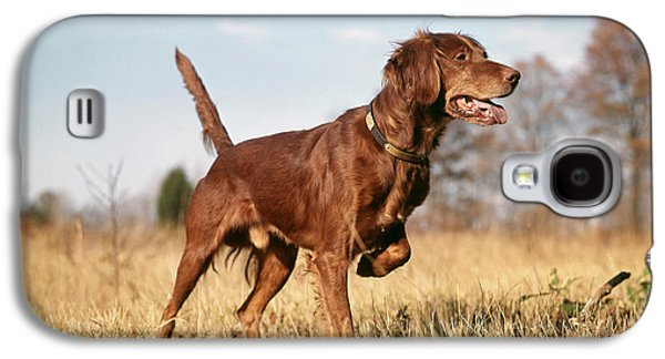 1960s Irish Setter Hunting Dog On Point Galaxy S4 Case