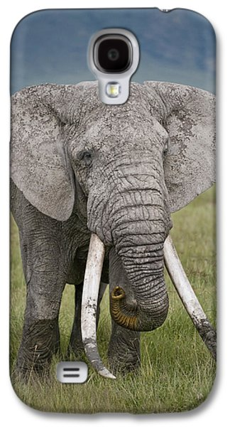 African Elephant Loxodonta Africana Galaxy S4 Case by Panoramic Images