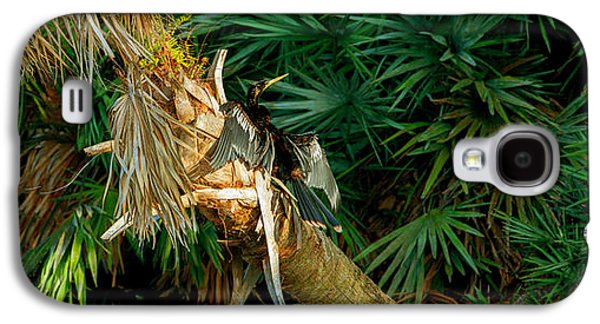 Anhinga Anhinga Anhinga On A Tree Galaxy S4 Case by Panoramic Images