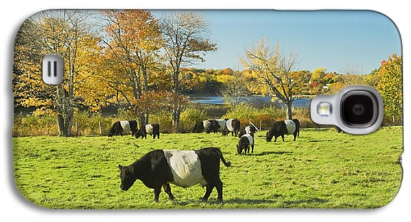 Belted Galloway Cows Grazing On Grass In Rockport Farm Fall Main Galaxy S4 Case