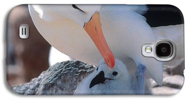 Black-browed Albatross With Chick Galaxy S4 Case