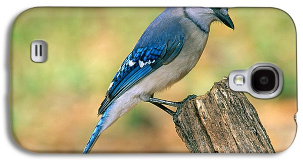 Blue Jay Galaxy S4 Case by Millard H. Sharp