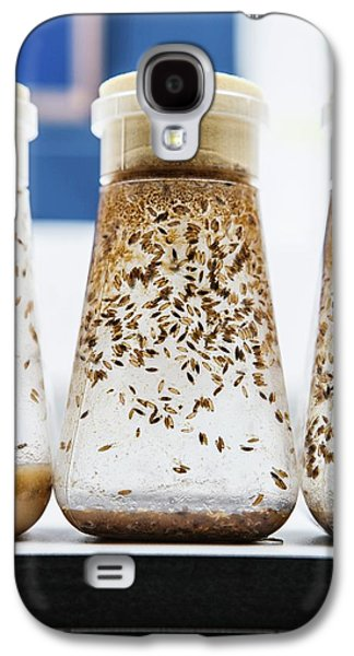 Breeding Fruit Flies For Research Galaxy S4 Case
