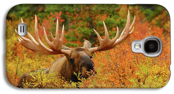 Bull Moose Feeding, Denali National Galaxy S4 Case by Michel Hersen