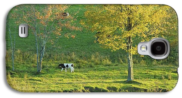 Calf On A Farm Fall Maine Galaxy S4 Case by Keith Webber Jr