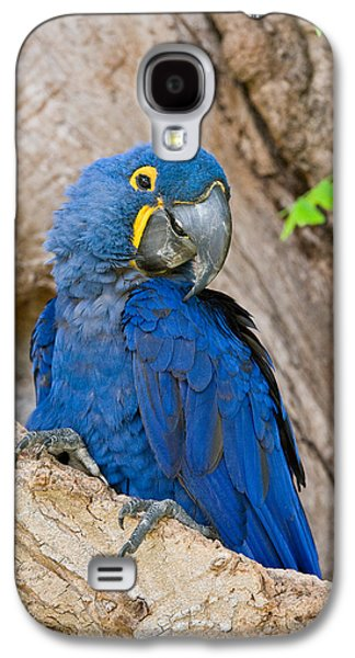 Close-up Of A Hyacinth Macaw Galaxy S4 Case by Panoramic Images