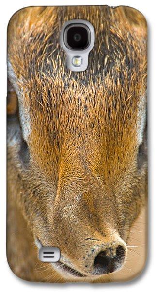 Close-up Of A Kirks Dik-dik, Tarangire Galaxy S4 Case