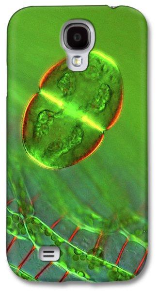 Cosmarium Desmid Galaxy S4 Case
