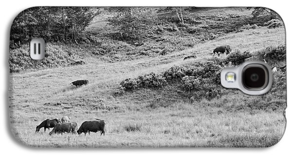 Cows Grazing In Field Rockport Maine Galaxy S4 Case by Keith Webber Jr