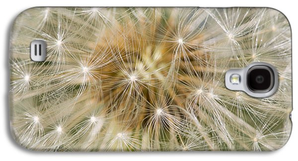 Dandelion Seedhead Noord-holland Galaxy S4 Case