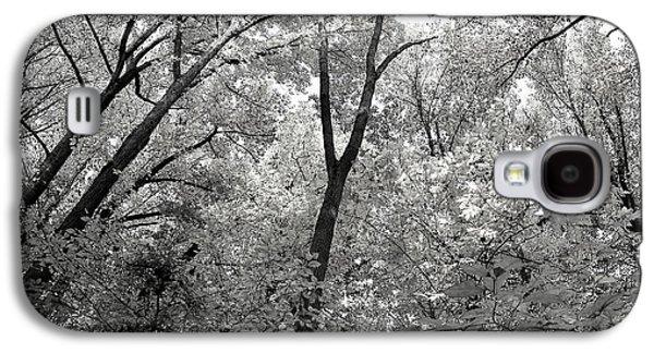 Fall Trees Galaxy S4 Case