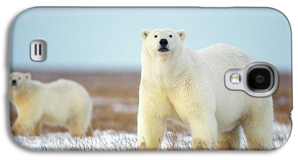 Polar Bear Galaxy S4 Case - Female Polar Bear With Spring Cub by Steven J. Kazlowski / GHG