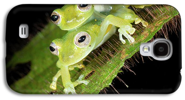 Glass-frogs Mating Galaxy S4 Case by Dr Morley Read