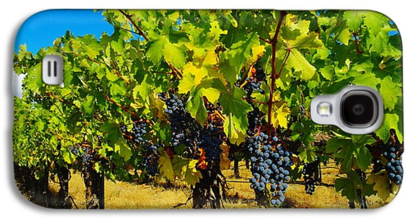 Grapes On The Vine Galaxy S4 Case by Jeff Swan