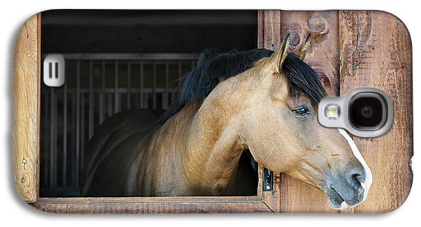 Horse In Stable Galaxy S4 Case by Elena Elisseeva