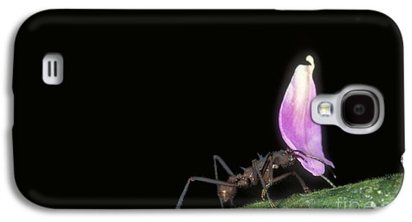Leafcutter Ant Galaxy S4 Case by Gregory G. Dimijian