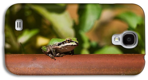 Pacific Treefrog Galaxy S4 Case by Ron Sanford