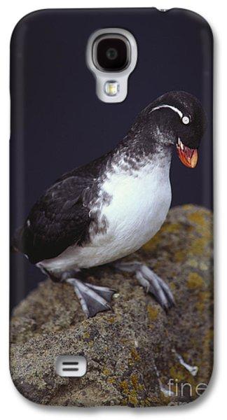 Parakeet Auklet Galaxy S4 Case