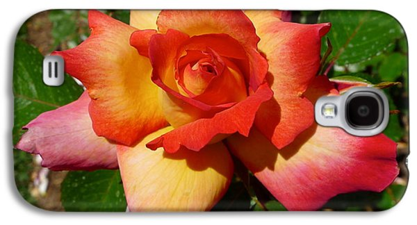 Rainbow Sorbet Rose Galaxy S4 Case by Denise Mazzocco