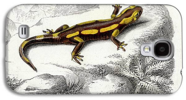 Salamanders Galaxy S4 Case - Salamander by Collection Abecasis