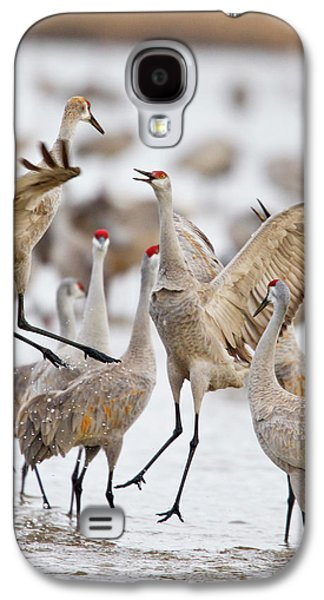 Sandhill Cranes Dancing On The Platte Galaxy S4 Case by Chuck Haney