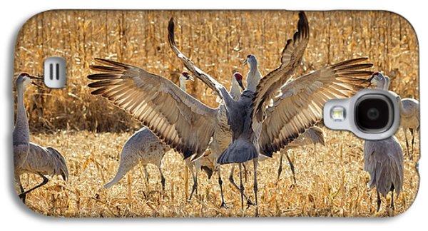Sandhill Cranes In The Corn Fields Galaxy S4 Case by Maresa Pryor