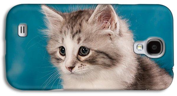 Cat Galaxy S4 Case - Sibirian Cat Kitten by Doreen Zorn