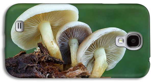 Sulphur Tuft Fungus Galaxy S4 Case by Nigel Downer