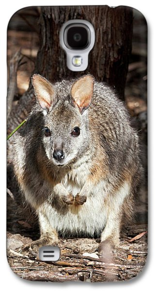 Tammar Wallaby (macropus Eugenii Galaxy S4 Case by Martin Zwick