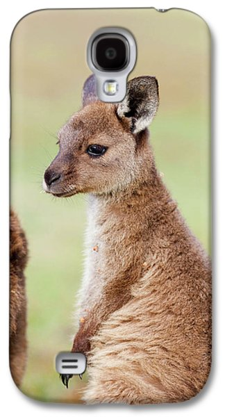 Western Grey Kangaroo (macropus Galaxy S4 Case by Martin Zwick