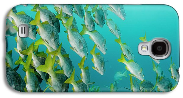 Yellowtail Grunt (anisotremus Galaxy S4 Case by Pete Oxford