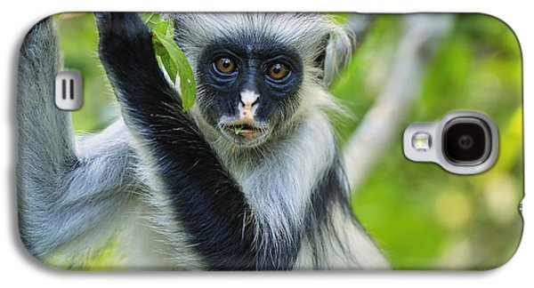 Zanzibar Red Colobus In Tree Jozani Galaxy S4 Case