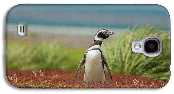 Falkland Islands, Sea Lion Island Galaxy S4 Case