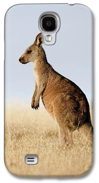 Eastern Grey Kangaroo Or Forester Galaxy S4 Case