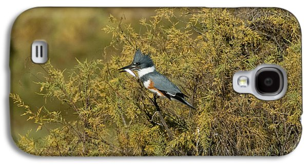 Belted Kingfisher With Fish Galaxy S4 Case by Anthony Mercieca