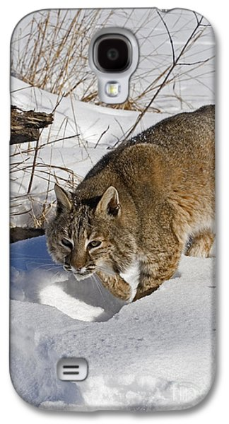 Bobcat Galaxy S4 Case by Linda Freshwaters Arndt