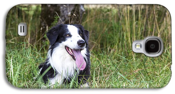 Border Collie In The Nature Galaxy S4 Case by Regina Koch
