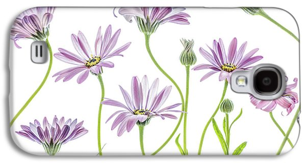 Daisy Galaxy S4 Case - Cape Daisies by Mandy Disher