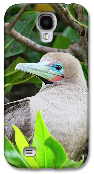 Ecuador, Galapagos Islands, Genovesa Galaxy S4 Case