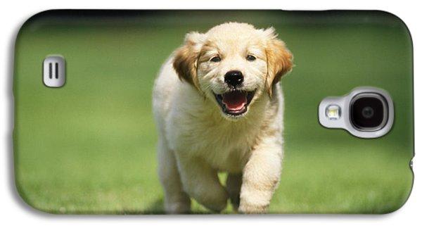 Golden Retriever Puppy Galaxy S4 Case by John Daniels
