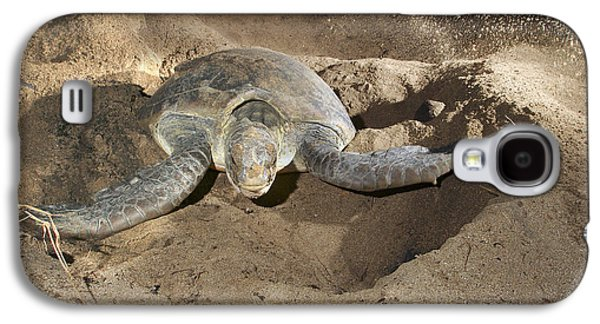 Green Turtle Laying Eggs Galaxy S4 Case by M. Watson